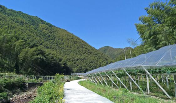 继海南省卫生健康系统禁塑试点工作,三亚市将在农业领域展开